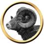 Golden Ram1