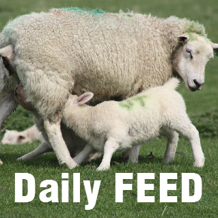 Feature Image - Daily FEED